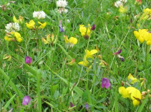 'Spontaneous' wildflowers in the coup area.  Image courtesy of Dave Garner